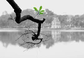 Chùm thơ tiễn con đi - Phạm Ngọc Thái